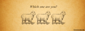follow-like-sheep-facebook-cover